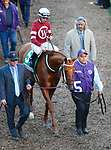 DEL MAR, CA - NOVEMBER 04: Gun Runner #5, ridden by Florent Geroux, walks the paddock before the Breeders' Cup Classic race on Day 2 of the 2017 Breeders' Cup World Championships at Del Mar Racing Club on November 4, 2017 in Del Mar, California. (Photo by Kazushi Ishida/Eclipse Sportswire/Breeders Cup/