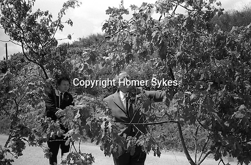 Grovely Forest Rights, Great Wishford,  Wiltshire England 1974. The largest boughs brought down from the Grovely Forest are paraded through the village.