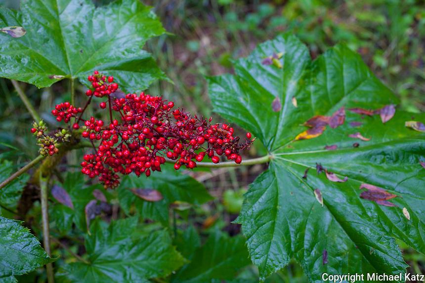 Talkeetna Berries
