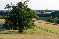 GERMANY, Teterow, forest and grazing land, old oak tree / Weide und Laubwald, Landschaftsschutzgebiet Saechsische Schweiz, Baumdenkmal, alte Eiche