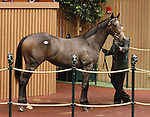 September 10, 2014: Hip #396 Candy Ride - Wild Hoots colt consigned by Lane's End sold for $450,000 at the Keeneland September Yearling Sale.   Candice Chavez/ESW/CSM