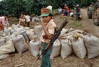- coffee harvest in a plantation north of Jinotega ....- raccolta del caffè in una piantagione a nord di Jinotega