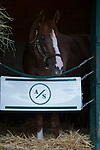 DEL MAR,CA-AUGUST 19: California Chrome in the barn at Del Mar Race Track on August 17,2016 in Del Mar,California (Photo by Kaz Ishida/Eclipse Sportswire/Getty Images)