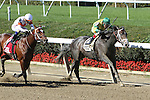 October 5, 2014: Blofeld with John Velazquez win the 102nd running of the Grade II Fururity Stakes for 2-year olds, going 6 furlongs at Belmont Park. Trainer: Todd Pletcher. Owner: Glencrest Farm LLC and JMquine . Sue Kawczynski/ESW/CSM