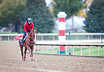 Pingxiang, trained by Hideyuki Mori, exercises in preparation for the Breeders' Cup Sprint at Keeneland 10.30.20.