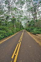 Highway 580 lined with trees. Kauai, Hawaii.