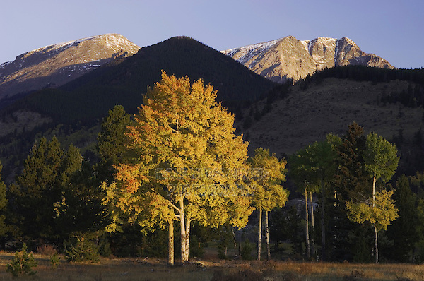 Sunrise over Mummy Range with Aspen trees in fallcolor, Rocky Mountain National Park, Colorado, USA