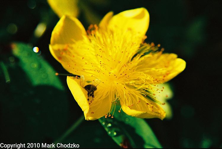 Beautiful yellow flower, close up.