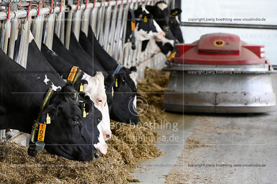 GERMANY, Echem, smart dairy cow milk farm, digitalization of agriculture, milk cows in stable, cows wearing collar with sensor and reporting chips for robot milking, behind fodder slider robot / DEUTSCHLAND, Landwirtschaftlichen Bildungszentrum (EBZ) in Echem, Digitalisierung im Kuhstall und Melkstand, Milchkühe tragen Sensoren und Melder für den Melkroboter, Futterschieber Roboter LELY JUNO