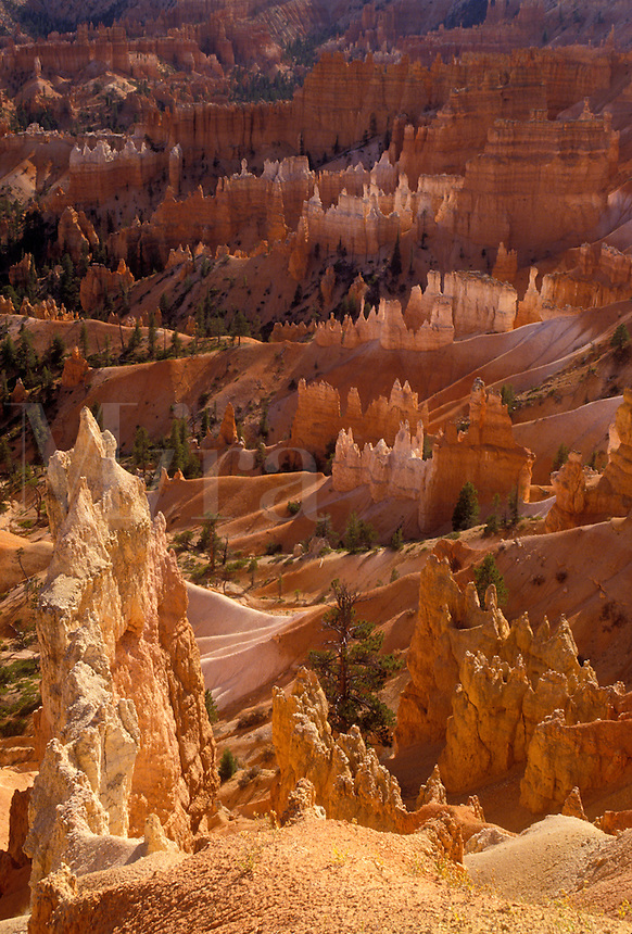 """AJ3835, Bryce Canyon, Bryce Canyon National Park, Paunsaugunt Plateau, Utah, Spectacular view of jagged colorful rock formations and pillars called """"""""hoodoos"""""""" in the canyon of Bryce Canyon Nat'l Park in the state of Utah."""