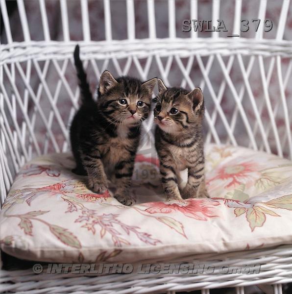 Carl, ANIMALS, photos(SWLA379,#A#) Katzen, gatos
