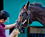 BALTIMORE, MD - MAY 15: Kentucky Derby winner Always Dreaming gets a bath after exercising in preparation for the Preakness Stakes this week at Pimlico Race Course on May 15, 2017 in Baltimore, Maryland.(Photo by Scott Serio/Eclipse Sportswire/Getty Images)