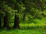 Deutschland, Bayern, Chiemgau, Inzell, Ortsteil Adlgass: beliebtes Ausflugsziel beim Forsthaus Adlgass - frisches Fruehlingsgruen | Germany, Upper Bavaria, Chiemgau, Inzell, district Adlgass: near popular Forester's House Adlgass - fresh green in spring