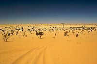 A view of the Sahara Desert outside Timbuktu. /Felix Features