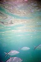 Fish underwater&#xA;<br />