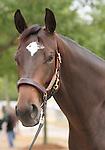 11 September 2010.  Hip #113  Bernardini - Zophie filly, consigned by Burleson Farms.