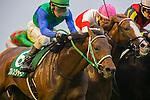 FUCHU,JAPAN-NOVEMBER 19: Bless Journey #6,ridden by Yoshitomi Shibara,wins the Tokyo Sports Hai Nisai Stakes at Tokyo Racecourse on November 19,2016 in Fuchu,Tokyo,Japan (Photo by Kaz Ishida/Eclipse Sportswire/Getty Images)