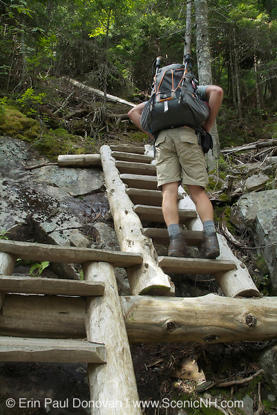 Trail ladders along the Willey Range Trail in the White Mountain National Forest of New Hampshire.
