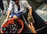 sellers of turtles  venditori di tartarughe