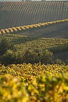 Europe/France/Midi-Pyrénées/81/Tarn/ Gaillac: Le Vignoble AOC Gaillac