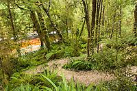 Densely in moss cloaked trees along Oparara River, Kahurangi National Park, West Coast, Buller Region, New Zealand