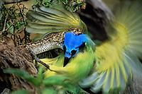 Reptiles: venomous snakes