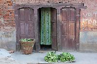 Nepal, Kathmandu.  Fresh Greens by a Doorway with a Green Curtain.