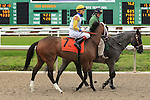 January 16, 2016: Northwest Tale with Brian Joseph Hernandez up in the Silverbulletday Stakes race in New Orleans Louisiana. Steve Dalmado/ESW/CSM
