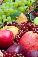 Harvested fruits and berry, apples malus, pears pyrus, gooseberries, Ribes rubrum currants, grapes, figs, in autumn fall in basket