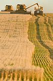 Cosecha de trigo, Balcarce, Buenos Aires, Argentina