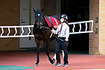 TOYOAKE,JAPAN-MAR 14: Daring Takt,ridden parades at the padock in the Kinko Sho at Chukyo Racecourse on March 14,2021 in Toyoake,Aichi,Japan. Kaz Ishida/Eclipse Sportswire/CSM