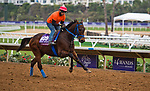 DEL MAR, CA - OCTOBER 30: Mongolian Saturday, owned by Mongolian Stable and trained by Enebish Ganbat, exercises in preparation for Breeders' Cup Turf Sprint at Del Mar Thoroughbred Club on October 30, 2017 in Del Mar, California. (Photo by Anna Purdy/Eclipse Sportswire/Breeders Cup)