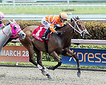 HALLANDALE BEACH, FL - FEB 17:Mr Joshua #1 trained by Gilberto Zerpa with Jose Ortiz in the irons wins the $50,000 Trust Buster Claiming Stakes at Gulfstream Park on February 17, 2018 in Hallandale Beach, Florida. (Photo by Bob Aaron/Eclipse Sportswire/Getty Images)