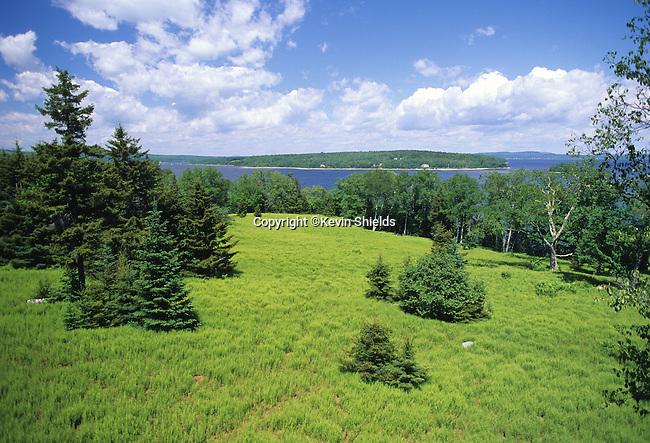 Field of ferns on Sears Island, Searsport, Maine, USA