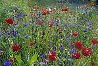 Field of wildflowers.