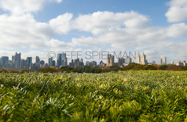 AVAILABLE FROM JEFF AS A FINE ART PRINT.<br /> <br /> AVAILABLE FROM PLAINPICTURE FOR COMMERCIAL AND EDITORIAL LICENSING.  Please go to www.plainpicture.com and search for image # p5690191.<br /> <br /> Manhattan Skyline Viewed from Central Park with Autumn Foliage, New York City, New York State, USA