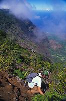 Kalalau valley with amau fern in foreground