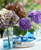Single Hydrangea stems displayed in glass bottles with blue tinted water