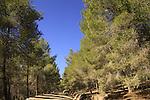 Israel, Shephelah, Amatzia forest at Givat Gad (Gad Hill)