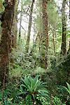 Oparara Arch Track, Kahurangi NP, New Zealand