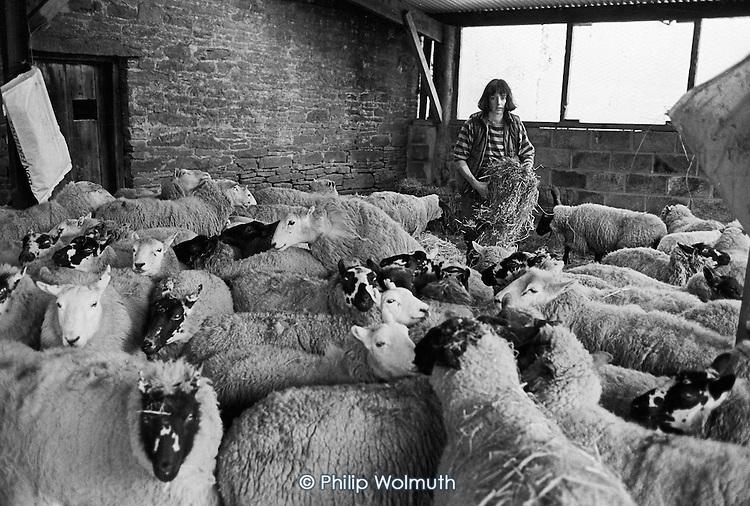 Juliet, Cwm Farm, 1988