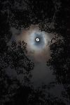 Rainforest canopy by moonlight. Danum Valley, Sabah, Borneo.