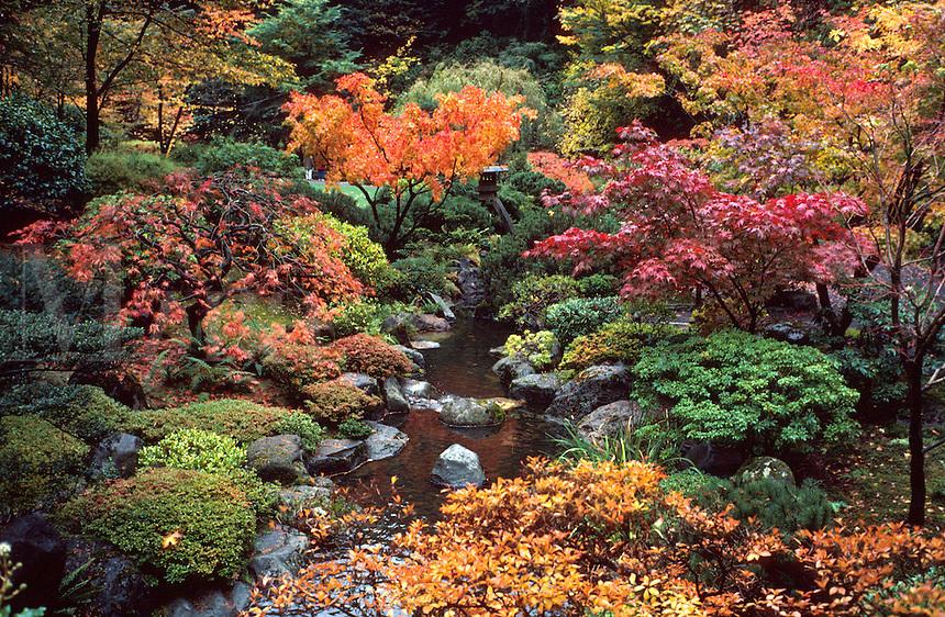 Japanese garden landscape, colorful maples, trees, fall foliage, autumn leaves, gardening, botanical. Oregon, Japanese Gardens.