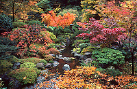 Japanese garden landscape, colorful maples, trees, fall foliage, autumn leaves, gardening, botanical. Oregon, Japanese Gardens.