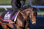 Equilateral, trained by Charles Hills, exercises in preparation for the Breeders' Cup Turf Sprint at  Keeneland 11.03.20.