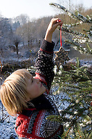 Weihnachtsbaum wird für Vögel im winterlichen Garten geschmückt mit Meisenknödeln, Hirsestangen, Fettfutter in Ausstechformen und anderen Leckereien, Vogelfutter, Vogel-Futter