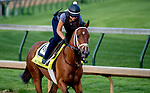 LOUISVILLE, KY - MAY 02: audible works out on the track in preparation for the Kentucky Derby at Churchill Downs on May 2, 2018 in Louisville, Kentucky. (Photo by John Vorhees/Eclipse Sportswire/Getty Images)