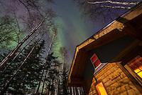 The aurora borealis over a log cabin in the boreal forest of Fairbanks, Alaska.