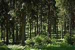 Germany; Free State of Thuringia, near Schmiedefeld am Rennsteig: hiking trail 'Rennsteig' in Thuringian Forest | Deutschland, Thueringen, bei Schmiedefeld am Rennsteig: der Rennsteig, Weitwanderweg und historischer Grenzweg im Thueringer Wald