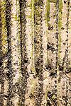 Close-up of a saguaro cactus, Arizona